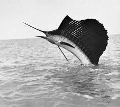 А знаете ли вы, что рыбы могут развивать такую же скорость