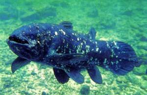 Латимерия – это не только редкая морская рыба