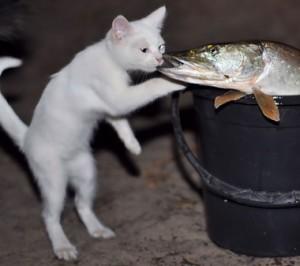 Тут его взгляд упал на соседского кота Ваську, который что-то с аппетитом уминал.