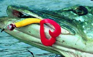 Ловля на твистеры осенью подразумевает ловлю щуки как однохвостовыми , так и двухвостовыми твистерами.