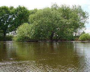Наблюдая за участком  реки,  хочется  понять,  куда же может выходить на кормежку сом, где же тот перспективный участок его ловли.