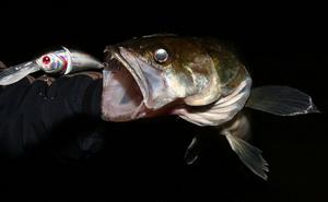 Подмечена одна особенность ночного поведения этого хищника   - судак ночью,  перед своим выходом на мель, скапливается на примыкающей к ней бровке в верхней её части.