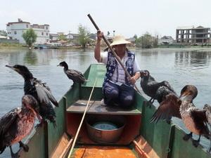 Бакланы на рыбалке
